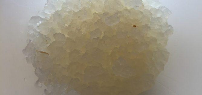 Kefirkorn som bruges til at lave vandkefir